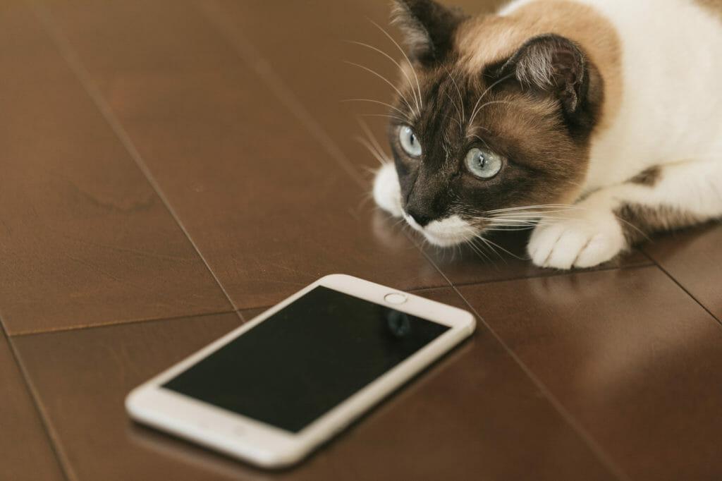 スマホとそれを見つめる猫