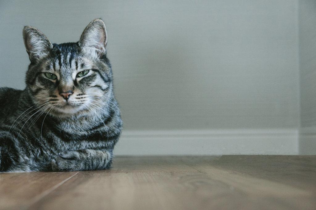 悩ましい顔の猫の写真