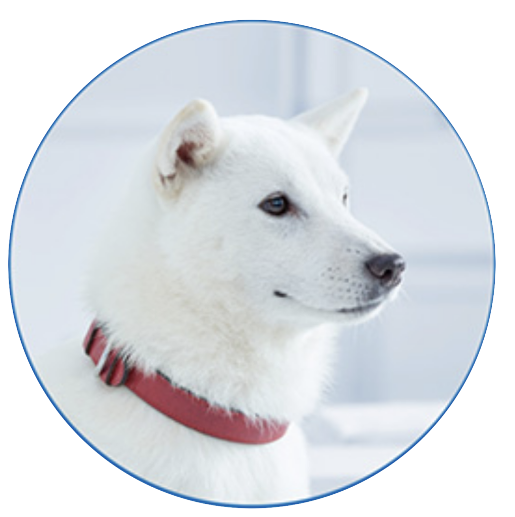 ソフトバンクのお父さん犬