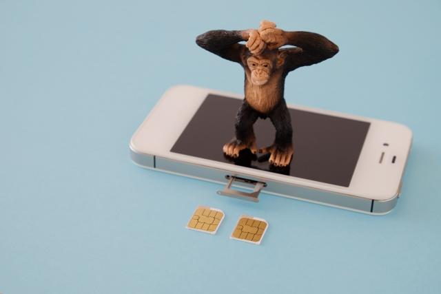 スマホの上で2つのSIMカードを見つめるチンパンジー
